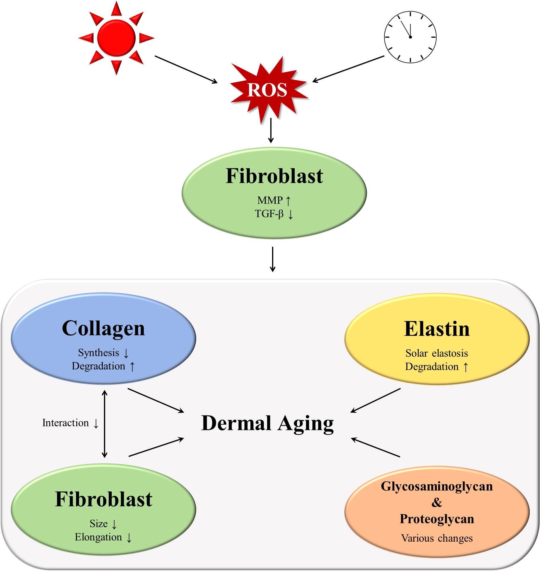skin-problems-hormone imbalance
